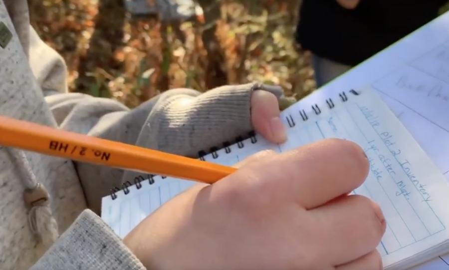 Students+Study+Invasive+Species+in+School+Forest