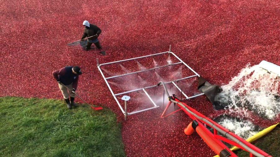 Cranberry+Grower+Gives+History